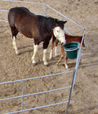 Travel-N-Corrals portable horse corrals for trailer